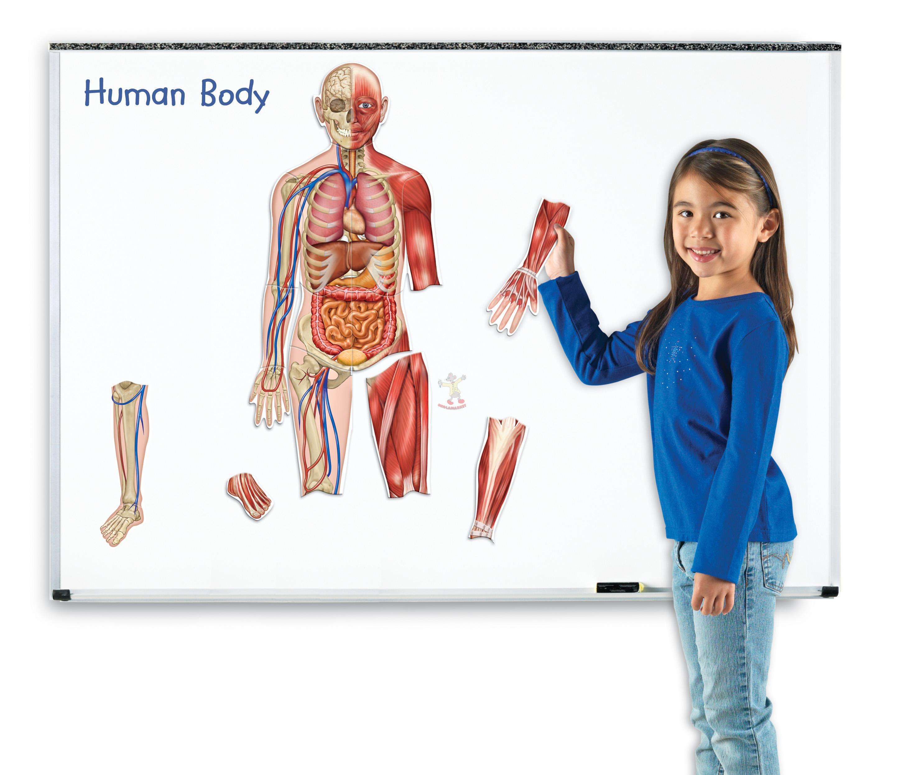 Lidské tělo - magnetický model